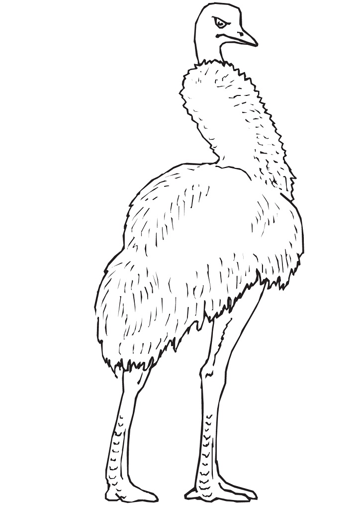 Cute Emu Coloring Pages