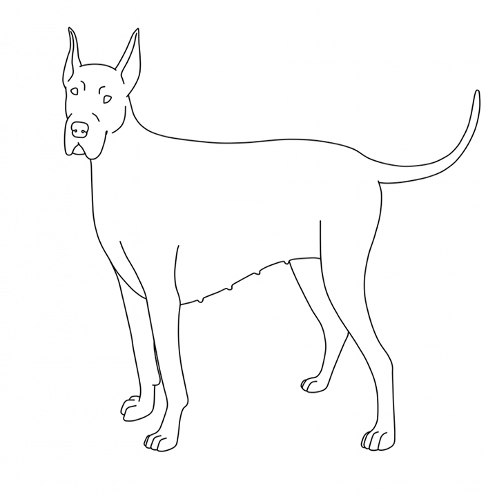 Easy Great Dane Coloring Pages