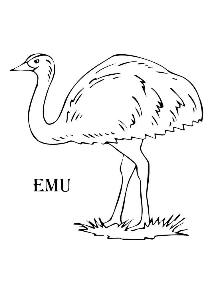 Emu Coloring Pages
