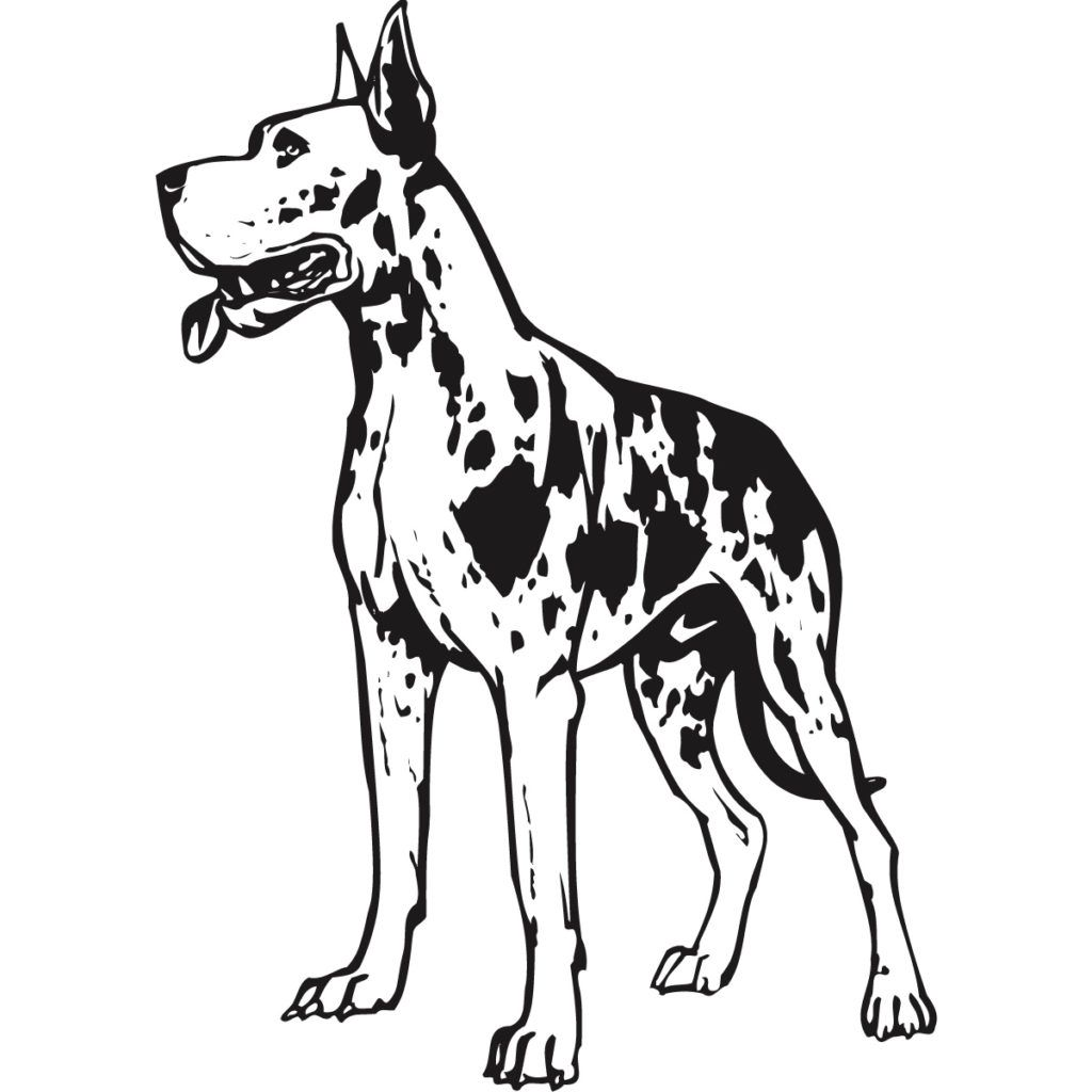 Great Dane Harlequin Coloring Pages