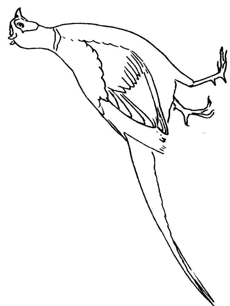Pheasant Bird Coloring Page