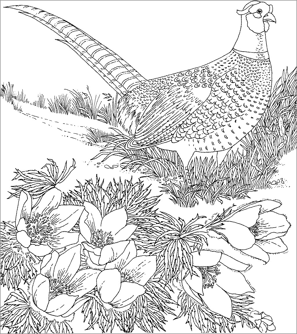 Pheasant Coloring Page For Adults