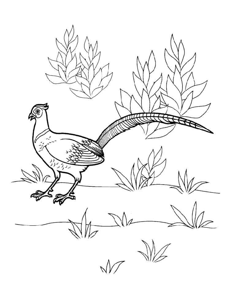 Pheasant Coloring Sheet