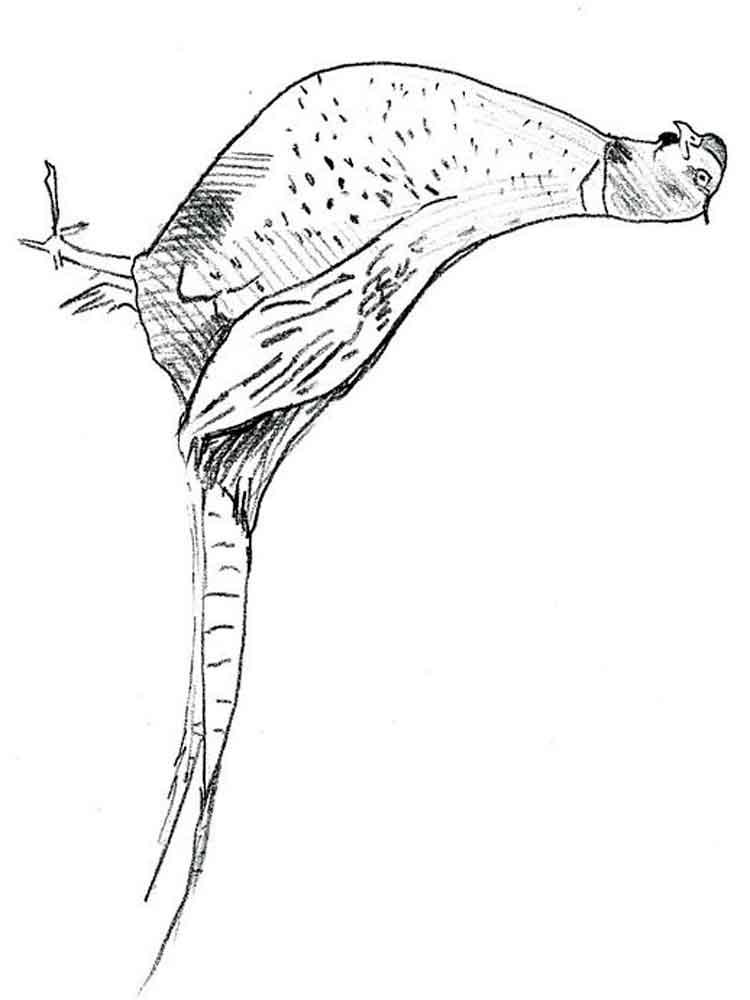 Printable Pheasant Coloring Page