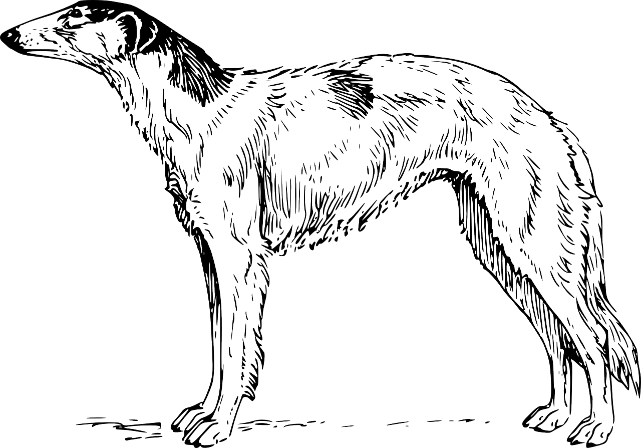 Realistic Greyhound Dog Coloring Page