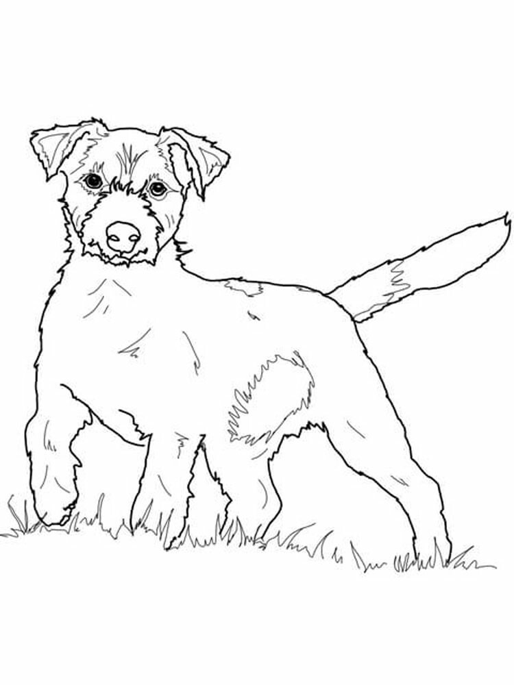 Cute Jack Russell Coloring Pages