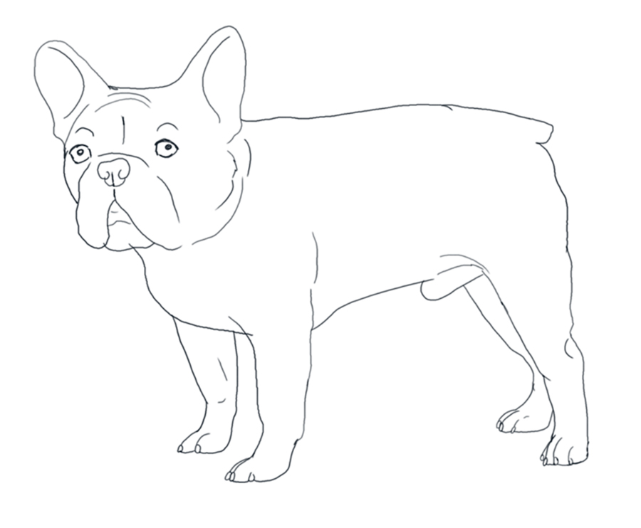 Easy French Bulldog Coloring Page