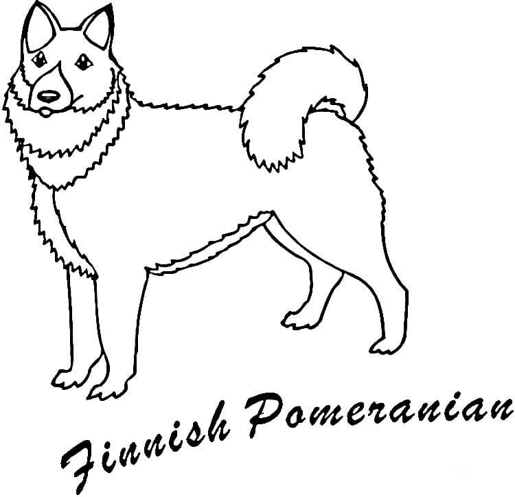Finnish Pomeranian Coloring Page