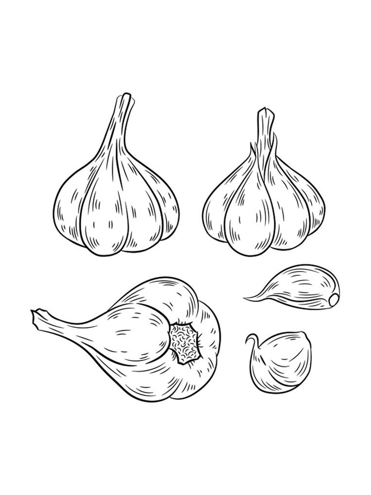 Garlic Printable Coloring Page