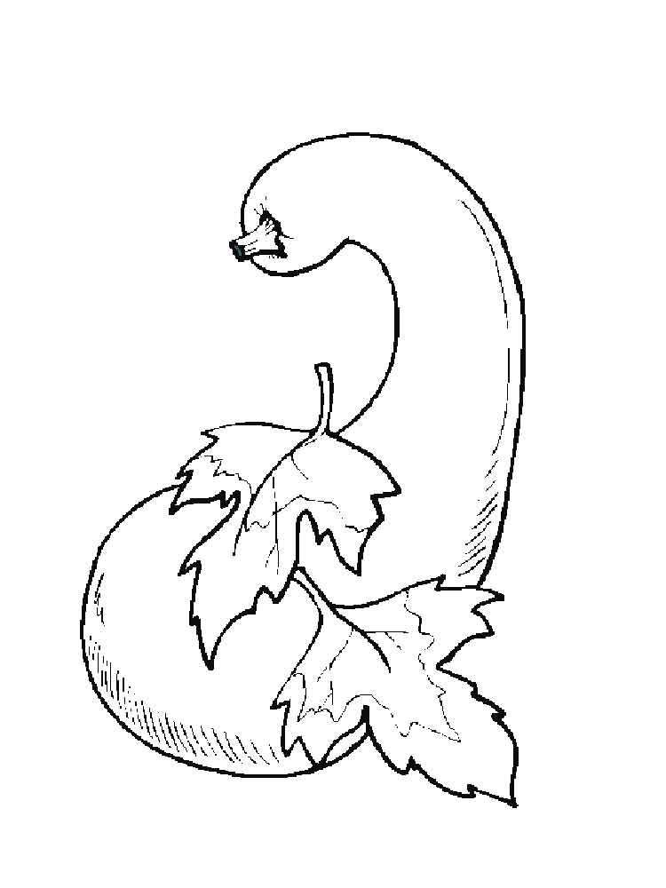Gourd Squash Coloring Page