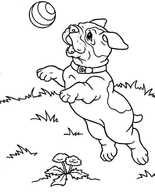 Playful French Bulldog Coloring Pages