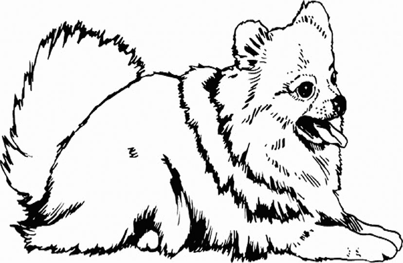 Pomeranian Coloring Pages