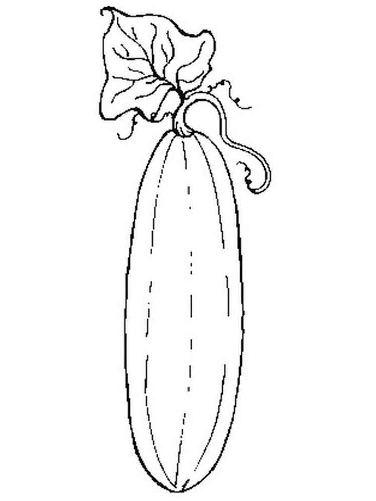 Squash Vegetable Coloring Page