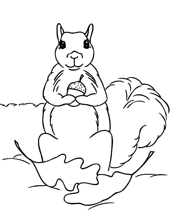 Squirrel Holding Acorn Coloring Page