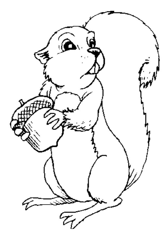 Squirrel And Acorn Coloring Page