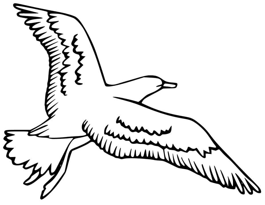Albatross Coloring Printable