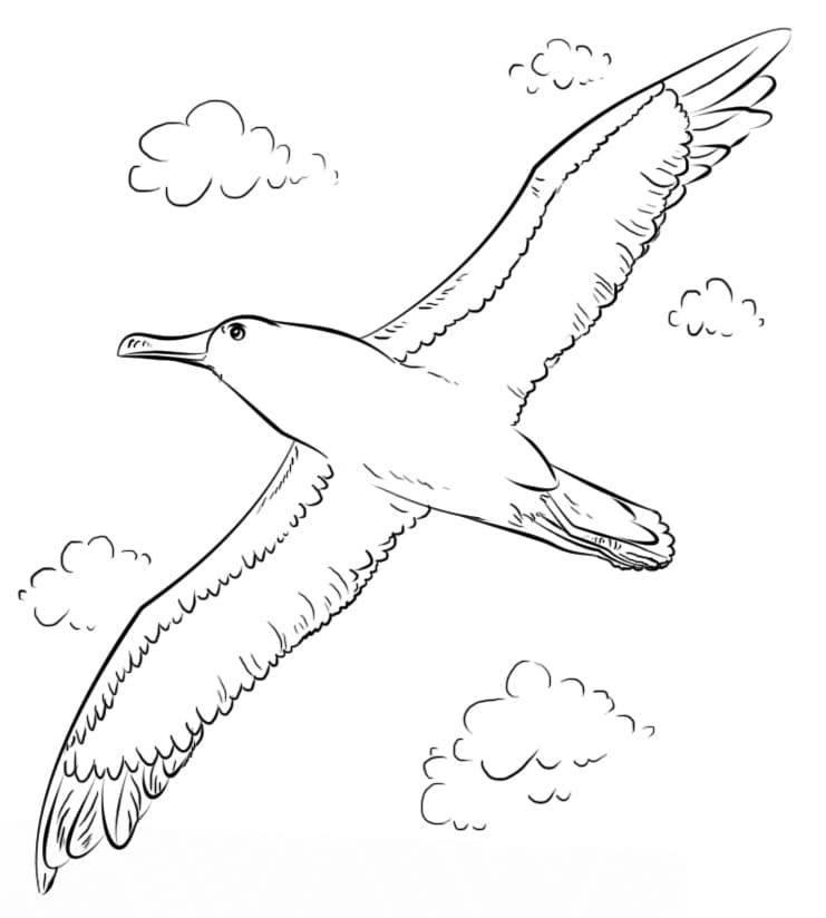 Albatross In The Clouds Coloring Page