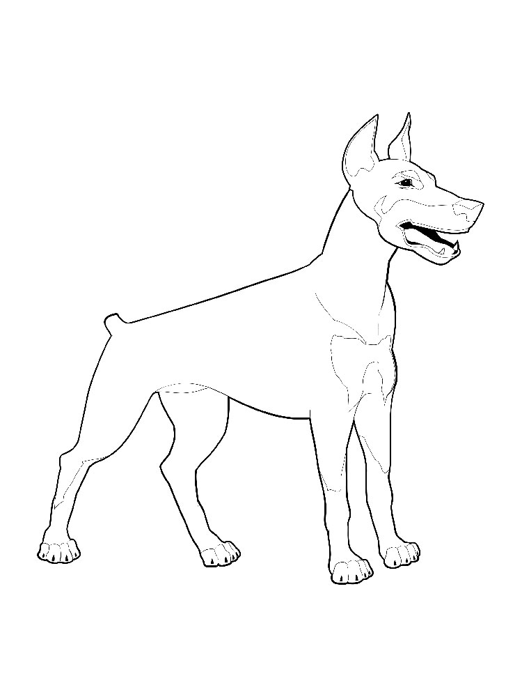 Cute Doberman Dog Coloring Page