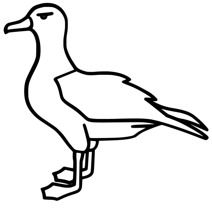 Simple Albatross Coloring Page