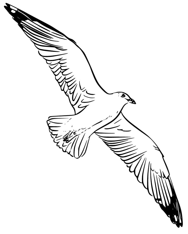 Soaring Albatross Coloring Page