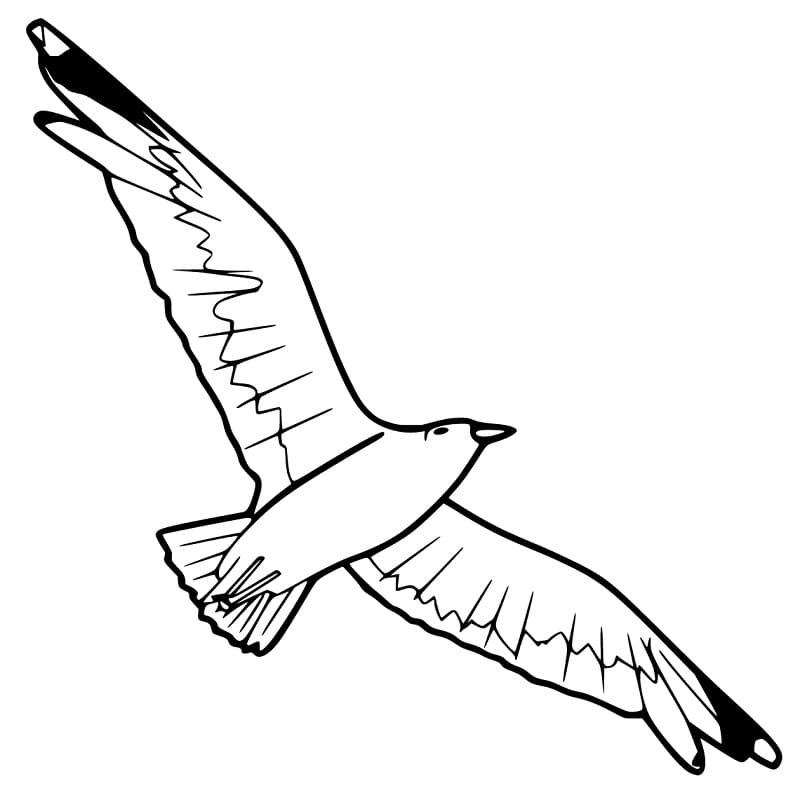 Soaring Albatross Coloring Pages