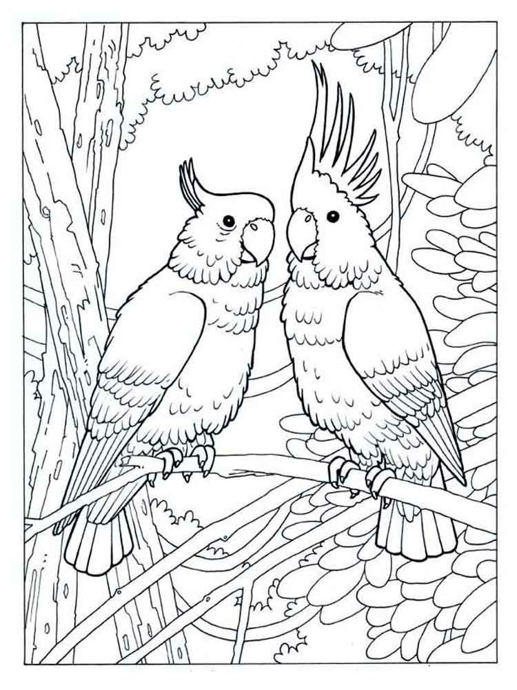 Two Cockatoos Coloring Pages
